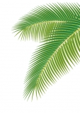 Palm  Leaves (1:45 - 1:72)