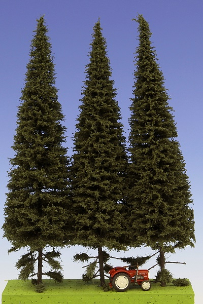Spruce with short trunk 230-270 mm (3x)