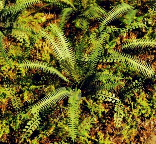 Tropical Fern  (1:32 - 1:48)