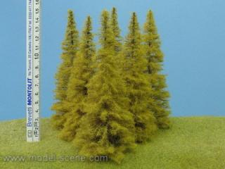 Larch Autumn 140-160 mm (3x)