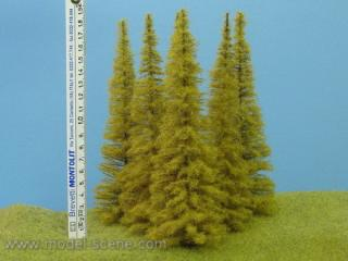 Larch Autumn 180-220 mm (3x)