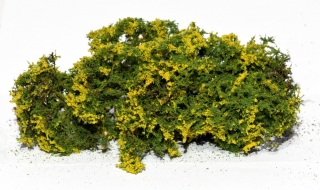 Flowering shrubs – Yellow