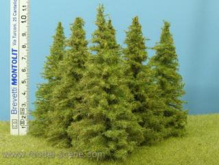Larch 90-110 mm (6x)