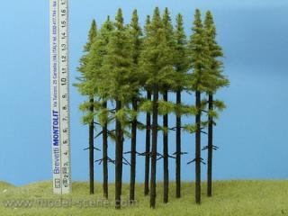 Larch  with trunk 140-160 mm (5x)