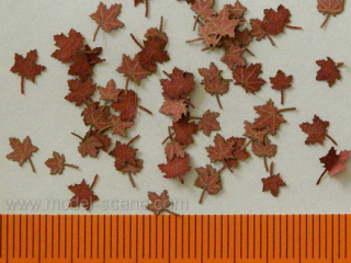 Maple - dry leaves (red colour) 1:72/87